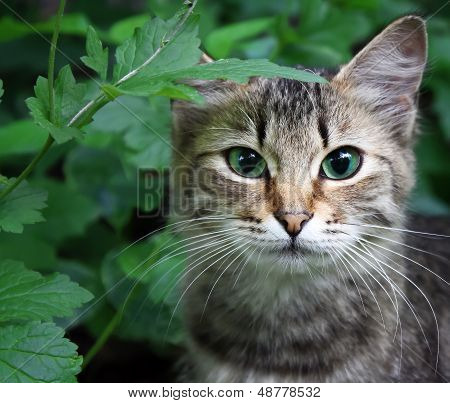 Cat In A Grass