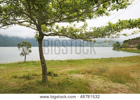 Tree along a lake in a volcanic crater