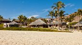 image of tiki  - Palm trees tiki huts and sandy beaches in Cabo San Lucas Mexico - JPG