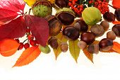 stock photo of acorn  - Autumn on the white background - JPG