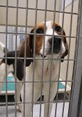 picture of stray dog  - a dog in an animal shelter - JPG