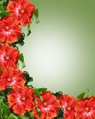image of hawaiian flower  - Image Composition for Card invitation stationery page background or border of Tropical hibiscus flowers with copy space - JPG