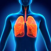 pic of respiratory disease  - Female Anatomy of Human Respiratory System - JPG