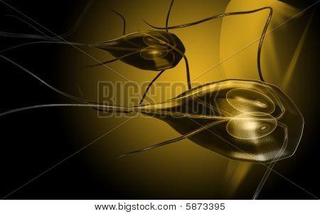 Flagella bacterium