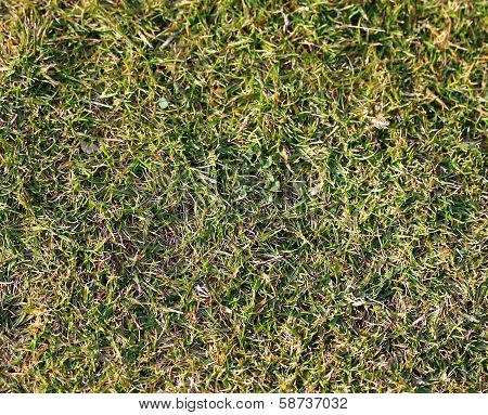 Green Grass Garden Bed