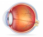 foto of orbs  - Human eye anatomy diagram medical illustration - JPG