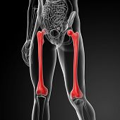 3d render the femur