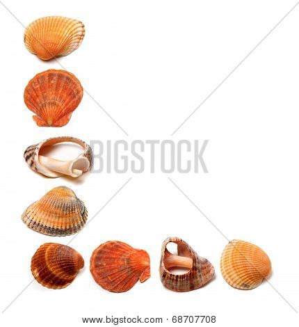 Letter L Composed Of Seashells