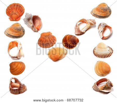 Letter M Composed Of Seashells