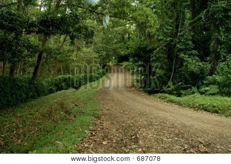 Dirt Road Thru Forest
