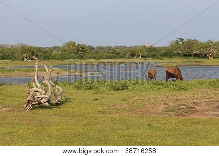 National park Yala. Landscape.
