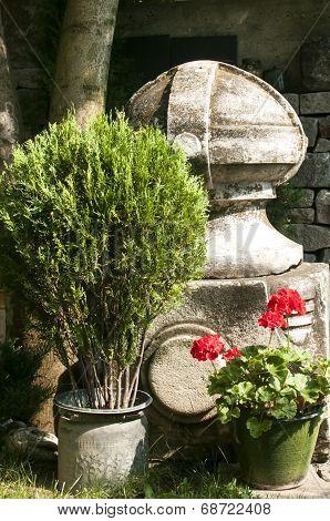 Corner of old garden