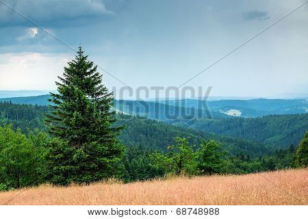 Orlicke mountains in summer