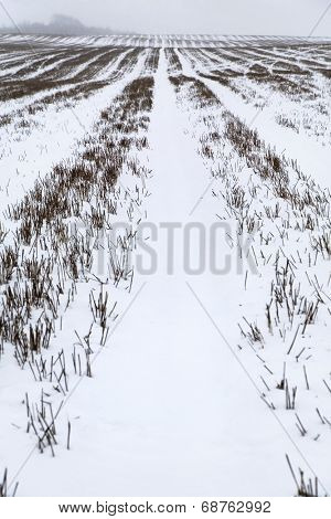 Snow covered field in Kent England.