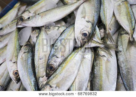 Dubai, UAE, Fresh fish for sale at Shindagha Market in Bur Dubai
