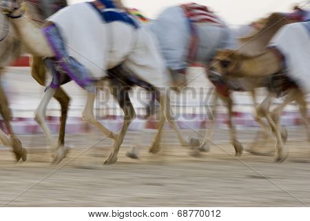 Dubai, UAE, Blurred motion of camels running during training at Nad Al Sheba Camel Racetrack