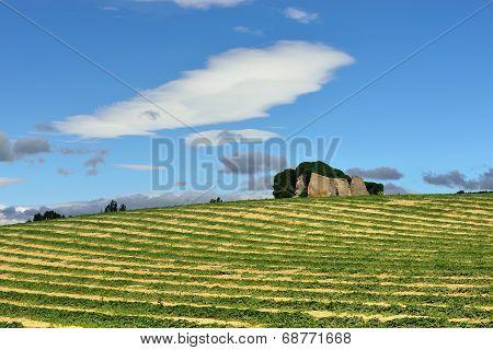 Provence Rural Landscape.