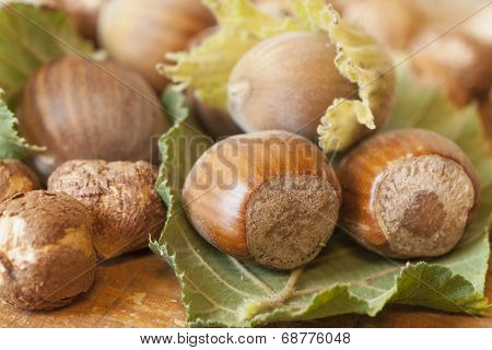 Hazelnuts fruits on wooden table top