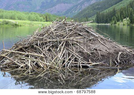Beaver dam in pond