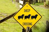 image of suffolk sheep  - Sheep Crossing sign on a Oregon sheep ranch - JPG