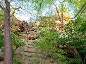 stock photo of starving  - Box Canyon at Starved Rock State Park with Spring Time Tree Growth - JPG