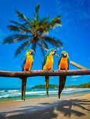 foto of indian blue  - Tropical vacation concept  - JPG