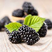 stock photo of blackberries  - Blackberry with leaves - JPG