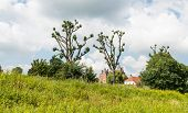 stock photo of dike  - Dutch historic castle Loevestein in the background and a dike with oddly shaped trees in the foreground - JPG