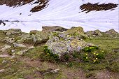 pic of lichenes  - Beautiful Lichen with Stone in snow mountain - JPG