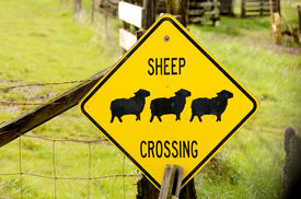 stock photo of suffolk sheep  - Sheep Crossing sign on a Oregon sheep ranch - JPG