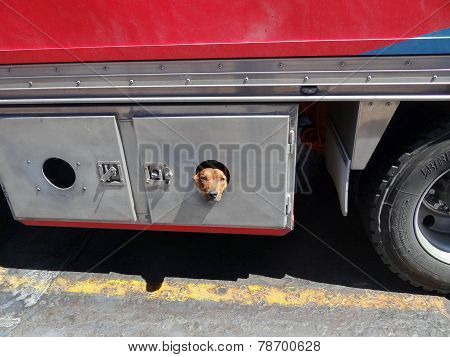 Dog Peeking Out Of A Truck Storage Hold