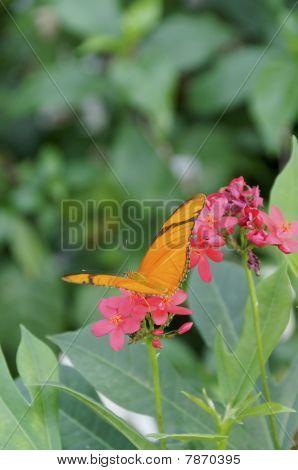 Pink Flower Nectar
