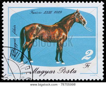 Horses Series