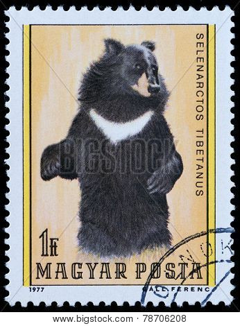 Series Bear