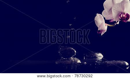 Spa Background With Pink Orchids And Fresh Water Splashing On Black Basalt Spa Stones