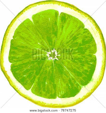 slice of lime drawing by watercolor