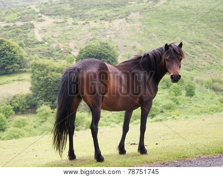 Horse In Nature