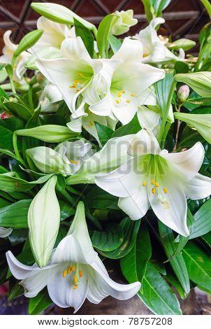 Amaryllis Flowers Bouquet