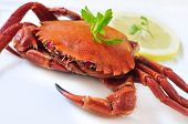 image of cooked crab  - closeup of a cooked velvet crab on a white background - JPG