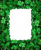 stock photo of four leaf clover  - Saint Patrick - JPG