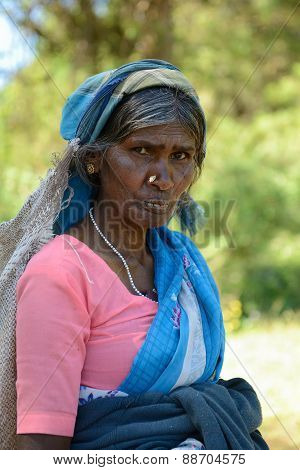 Woman To Collect The Tea Away On Tea Plantations