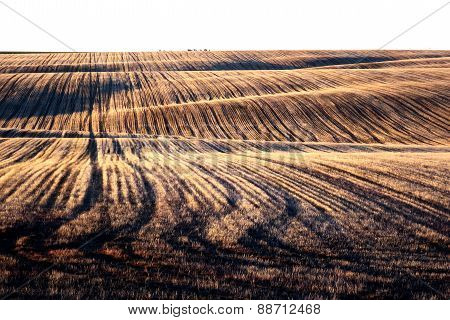 Palouse Farm Field at Dusk
