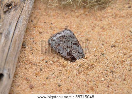Cipolin On Beach