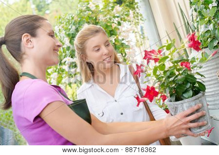 Florist advising a customer