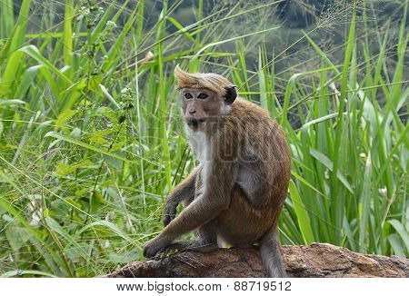 One Punk Small Monkeys Sitting By The Road