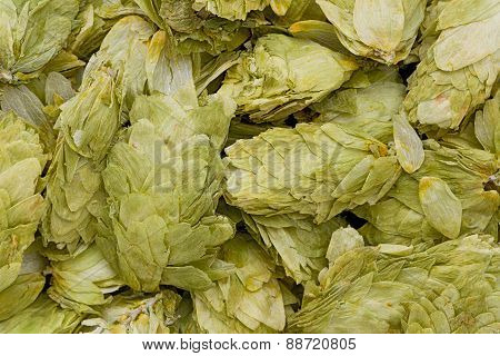 Dried Hops ( Humulus Lupulus)