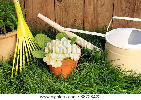 Garden rake, primrose flowers in a clay pot and a watering can against grass and a wooden fence.