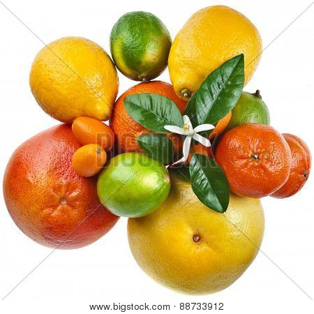 Assortment of  Beautiful citrus fruits top view close up macro isolated on white background