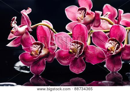 spa concept �red branch gorgeous orchid flower