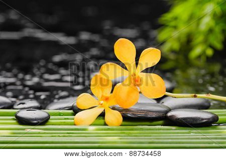 Yellow orchid and stones with bamboo grove on wet background